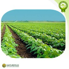 Precios de fábrica de extracto de kava kava/extracto de kava en polvo/kava extracto de la raíz