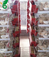 A frame 6 tiers battery quail cages for 360-480 layer quails