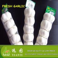 jinxiang fresh white garlic 5 pieces in a bag