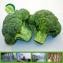 broccoli sprout extract organic broccoli powder
