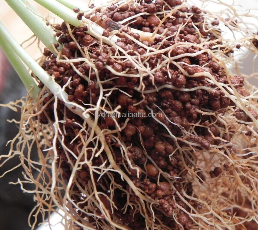 Soilless agriculture aquaponics system nutrient buy for Soil less farming