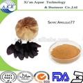 Negro en polvo de ajo grandes nutrientes& amino ácido