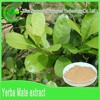 Top selling 100% organic Paraguay Tea plant Extract powder bulk
