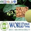 Hot sale Gotu Kola extract/Asiaticoside 20%/Relieve pain plant extract