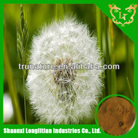 High quality of Dandelion leaf extract 3%,4% ,5%,6%,8%,10:1 20:1 HPLC