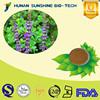 plant extract powder 8% 10% 20% Forskohlii / Coleus Forskohlii Extract Powder