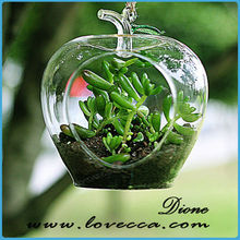 Large Hanging Glass Terrarium With Air Plant