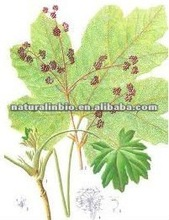 Cluster Mallow Fruit Extract Powder