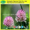 100% Natural plant Red Clover Extract Powder/Trifolium pratense