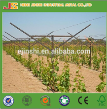 New type 1.5mm thickness Galvanized Vineyard Trellis Post /metal vineyard stakes/ grape post for grape grow