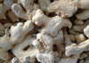 wholesale dry ginger supplier