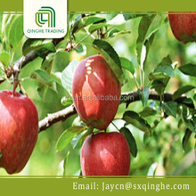 fresh fruit red delicous apple export