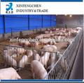 engordar plaza para los cerdos