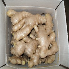 China Ginger Market Prices Air Dry Ginger Buyers