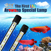 Arowana LED aquarium lights with colourful lights