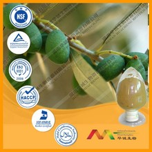 NSF-cGMP maunfacture and 100% natural olive leaf extract / oleuropein 25% wholesales