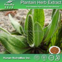 China Manufacturer Plantago Herb Extract Powder 4:1 5:1 10:1