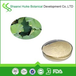 GMP pure leaf herbal extract lotus leaf extract 10:1