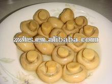 Canned Mushroom Choice Whole Premium Quality