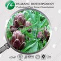 En polvo tipo de alcachofas p. E. Halal extractosdeplantas