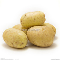 High quality potato exports from China