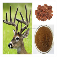 Natural Deer Velvet Antler Extract with competitive price