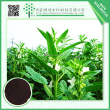 Chinese products wholesale black cohosh extract triterpene glycosides 2.5%