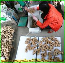 (NEW) 2015 Exporters:Dried Ginger/Exports southeast Asia, dubai, Pakistan
