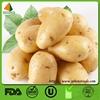 2014 new croped cheap china potato prices