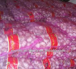 fresh pure white Garlic (2015 new crop 5.0cm)