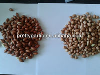 Indian peanut BOLD type crop 2012