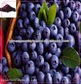 Boldo/cranberry extrato de mirtilo