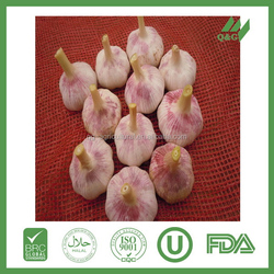 Vegetable china fresh garlic for sale