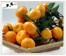 Own Orchard and Processing Factory Fresh mandarin Orange Citrus Fruit