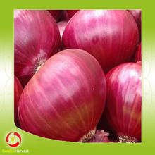 Hot sale small size red onion chinese onion in low price