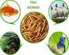 /product-gs/eco-friendly-top-quality-dried-mealworm-feed-ingredients-mealworm-60284069676.html