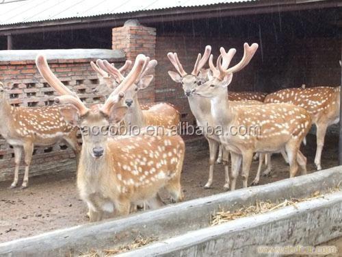 Chinese Deer Antler Velvet Natural Deer Antler Velvet