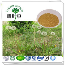 Factory supply High quality 10:1 dandelion root extract powder