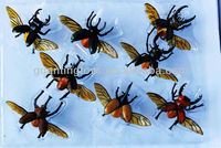 plastic insect models toy