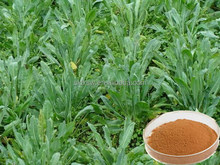 Export high quality top sell radix lithospermi herb extract
