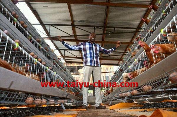 Poultry Feeding in Kenya Poultry Farming in Kenya Cage