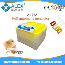 Famous egg incubator poultry grillers group slaughter poultry
