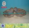 Concha de mar decorativa de cerámica en venta