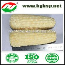 New Season White Glutinous Sweet Corn Waxy Corn Frozen Corn