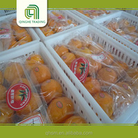 2015 new fresh valencia and navel oranges with great price