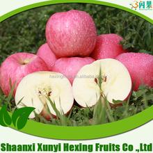NEW crisp fuji apple/fresh red fruits/organic fuji apples in 2015