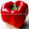 Natural & Fresh OLEORESIN PAPRIKA (Spice Oleoresin)
