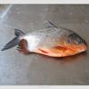 frozen pomfret fish stock fish