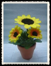 Cute decorative potted flower plant, sunflower in pot