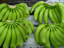 fresh Cavendish banana from Coasta Rica